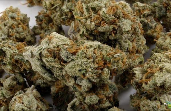 Cannabis Light - Il Successo della Canapa Arriva anche in Italia.